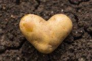 Kartoffel-Ritual II Foto: ©  Lenslife @ Fotolia