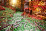 Auflösung negativer Energien Foto: ©  Grecaud Paul @ Fotolia