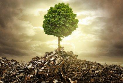 Lebensbaum Foto: ©  lassedesignen @ Fotolia